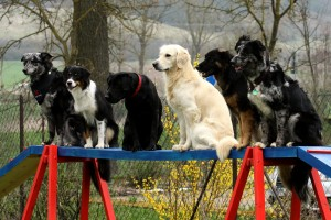 Laufsteg Hunde